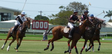 POLO is the new craze!